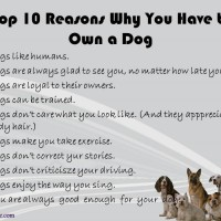 Top 10 Reasons To Own A Dog
