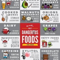 bad foods that could kill your dog