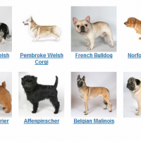 choosing the right dog breed for adoption