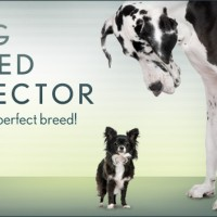 dog breed finder selector