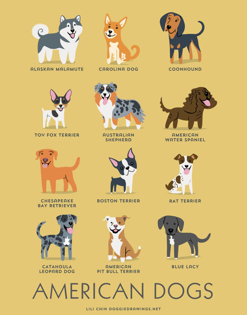 American Dogs Breed Picture