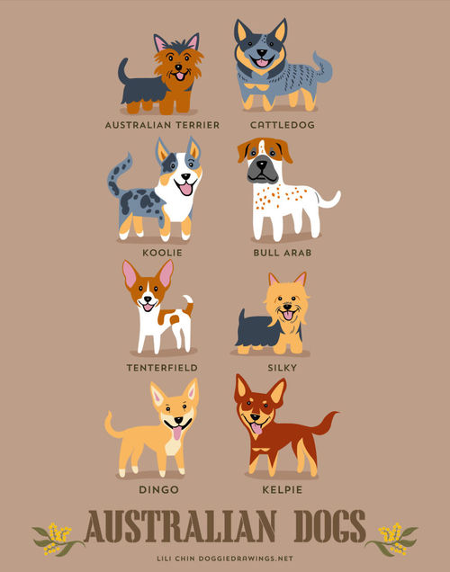 Australian Dogs Breed Picture