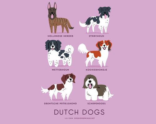 Dutch Dogs Breed Picture