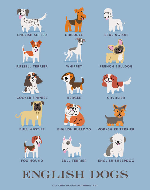 English Dogs Breed Picture