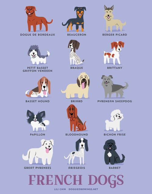 Frenchg Dogs Breed Picture