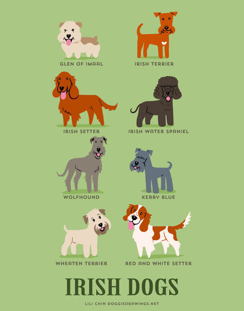 Pictures of Dog Breeds