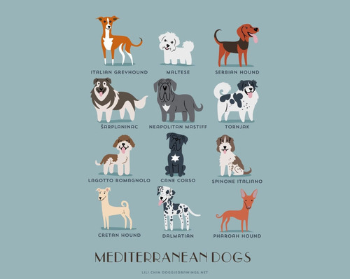 Mediterranean Dogs Breed Picture