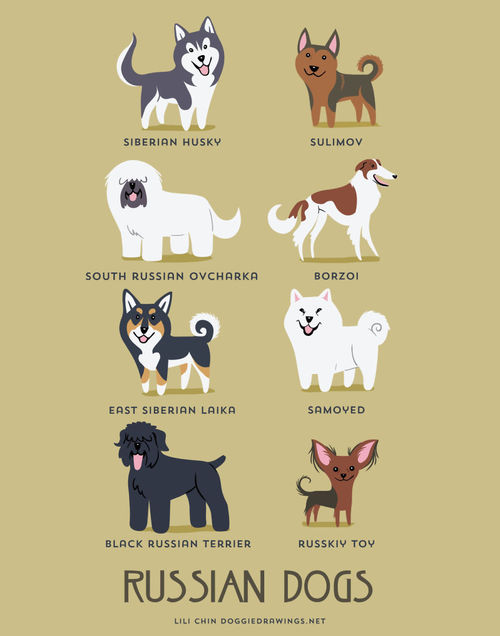 Russian Dogs Breed Picture