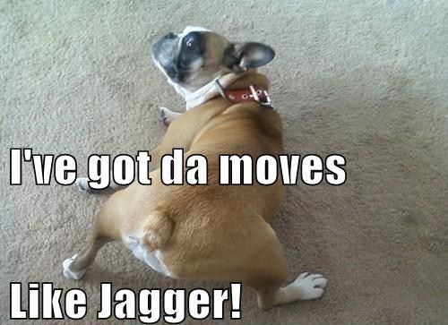 funny boxer dog pictures with captions