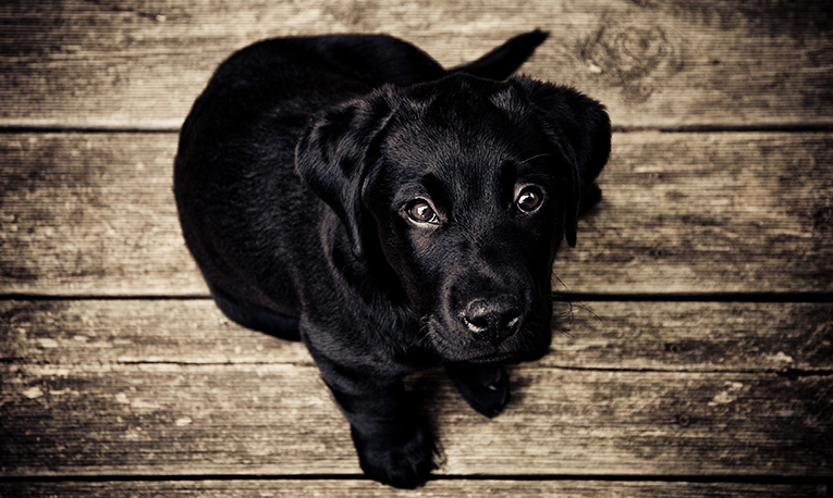 Black Dog Syndrome: Getting the Facts