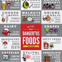 Foods That Can Kill Your Dog