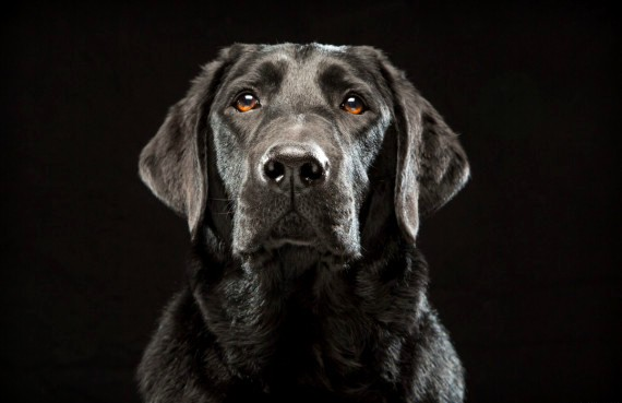 black dog syndrome pictures