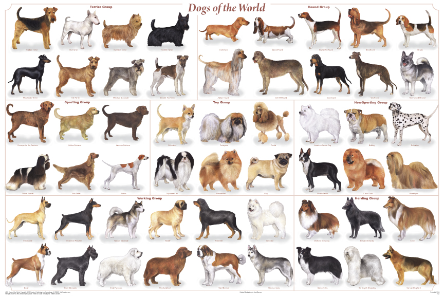 images of medium dog breeds list
