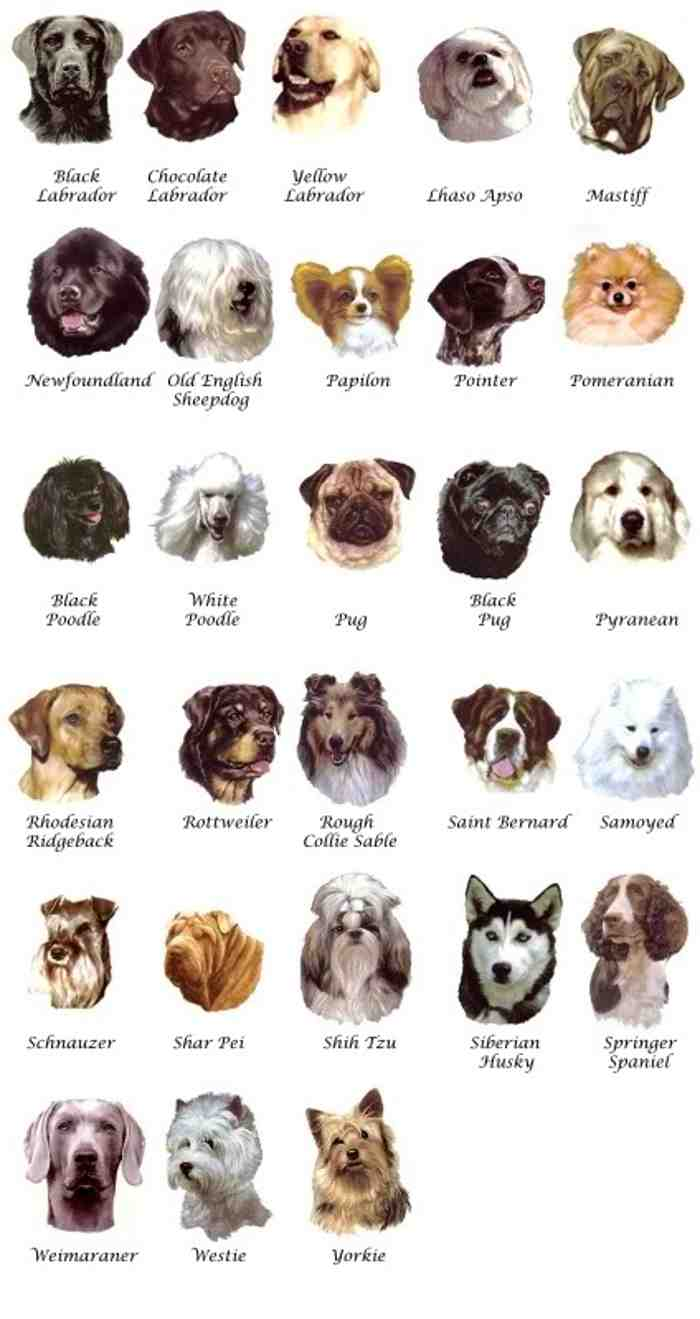 Medium Dog Breeds List With Pictures Breeders Guide
