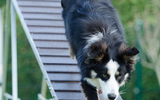 Tips for Keeping Your Canine in Great Shape