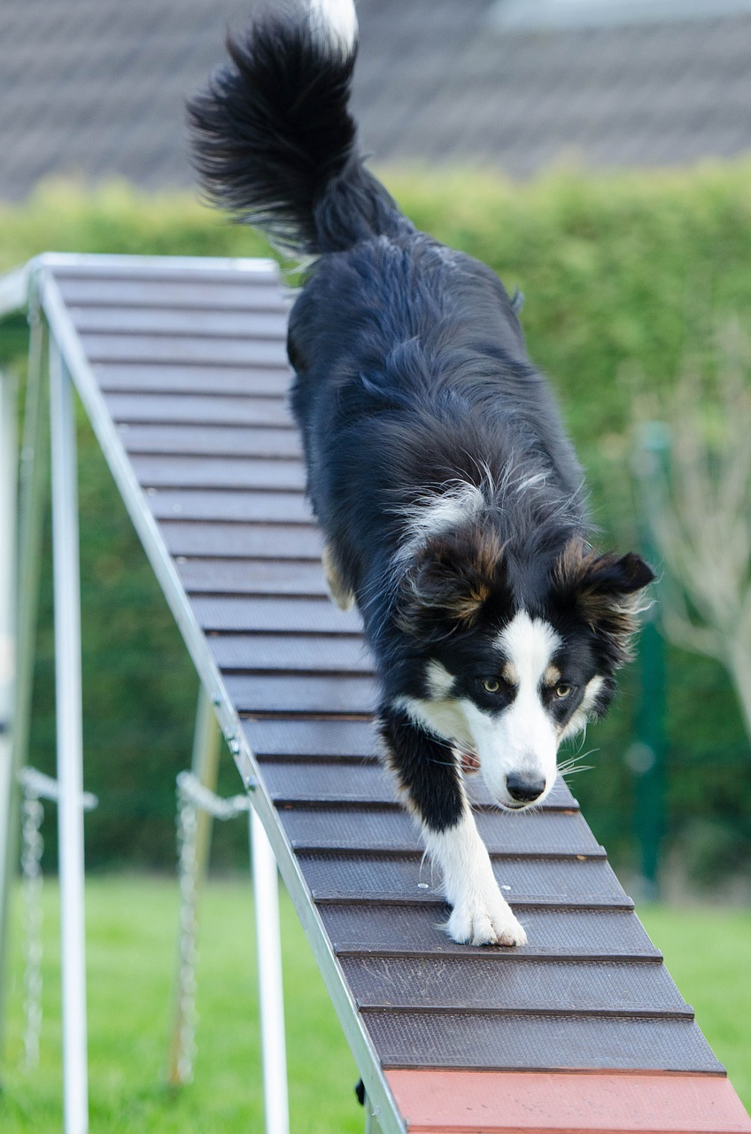 Exercise keeps your dog happy and healthy.