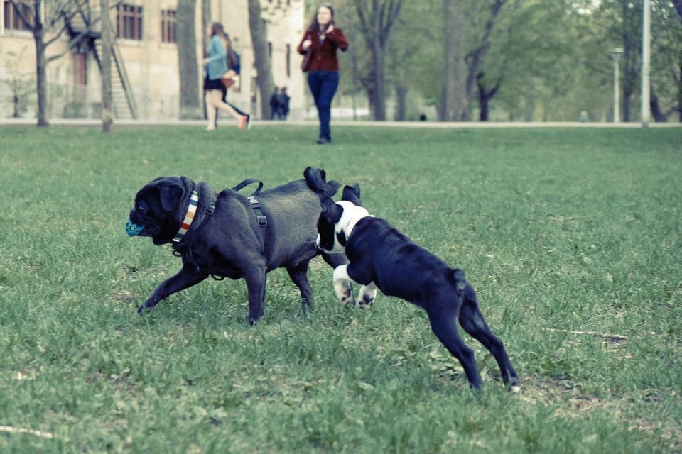 dogpark3