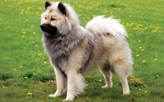 Rare Dog Breeds You May Not Know