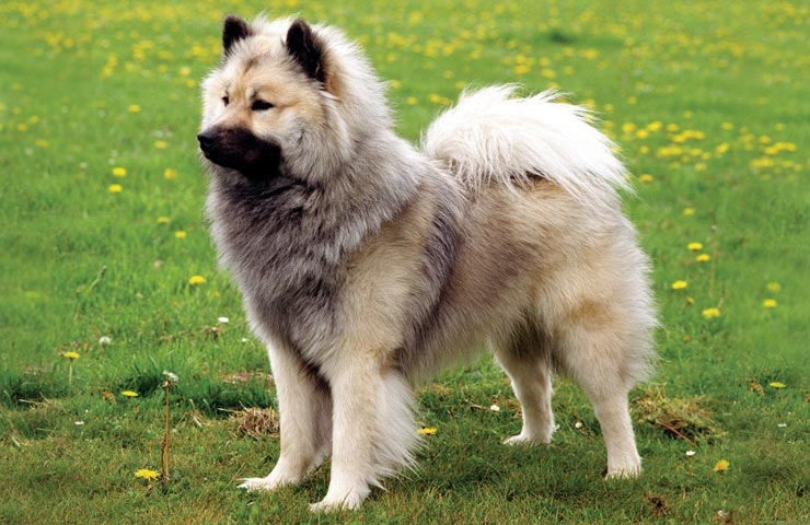 Best Cross Breed Dogs
