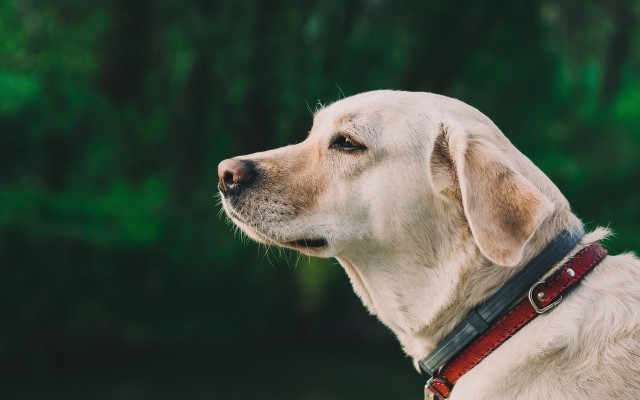 Collars and Leashes: What Should You Know Before Buying for Your Dog?