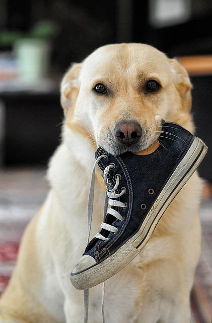 dog-633562_640