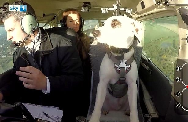 Abandoned Dog Becomes Pilot, Flies Plane