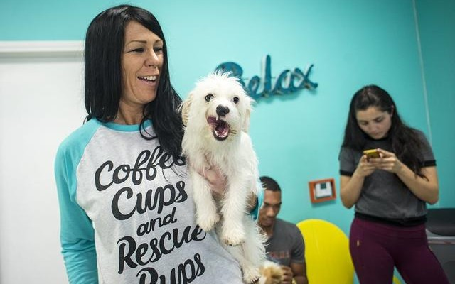 America's First Dog Cafe Opens in Los Angeles