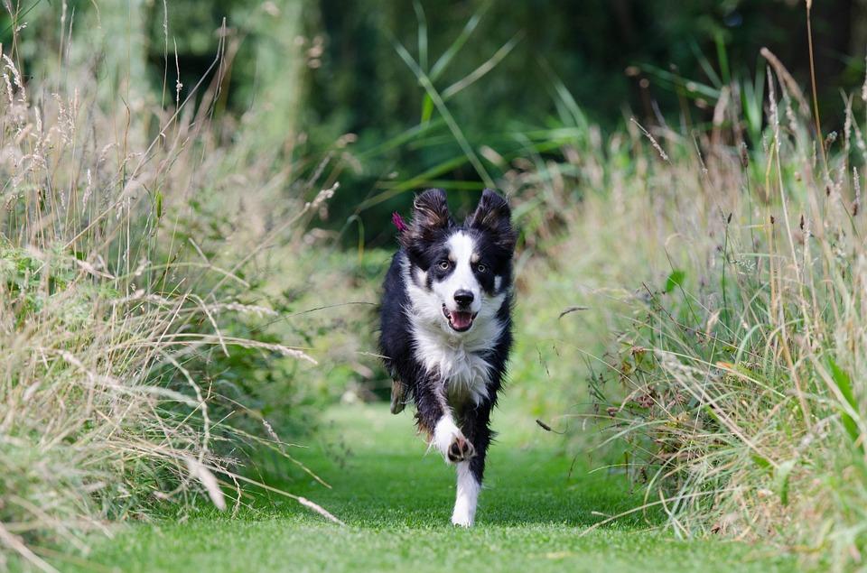 dogcome