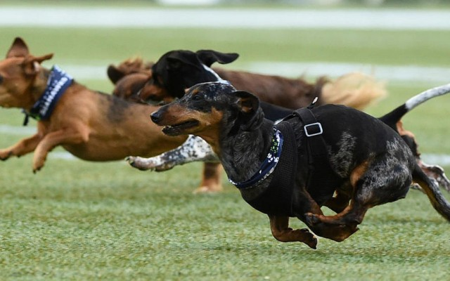 Dachshunds Unleashed! California Art Museum Features Art of the Wiener Dog