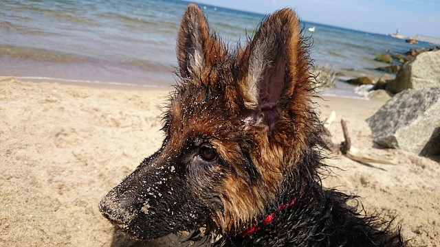 Taking Your Dog to the Beach? Remember These Things!