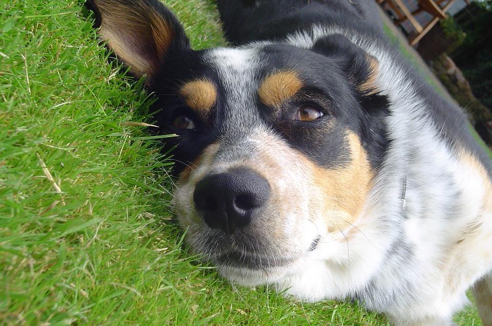dog-100381_960_720