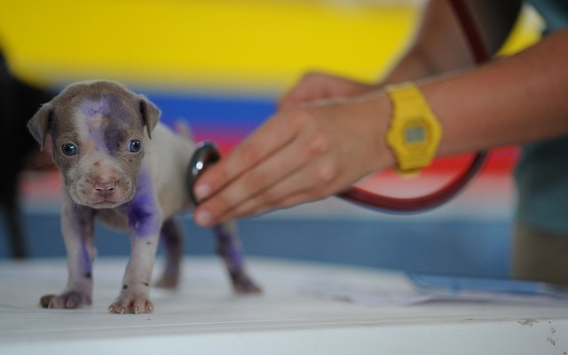 Parvo: All About the Potentially Deadly Virus