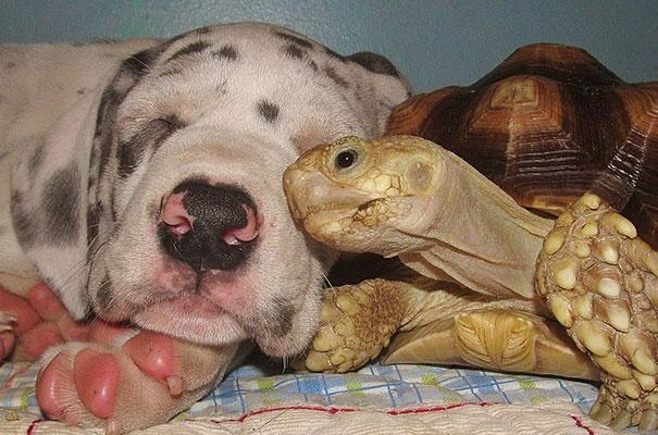 5 Dogs and their Unusual Best Animal Friends