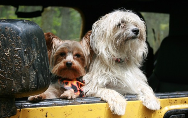 Checklist for Summer Road Trips With Your Dog