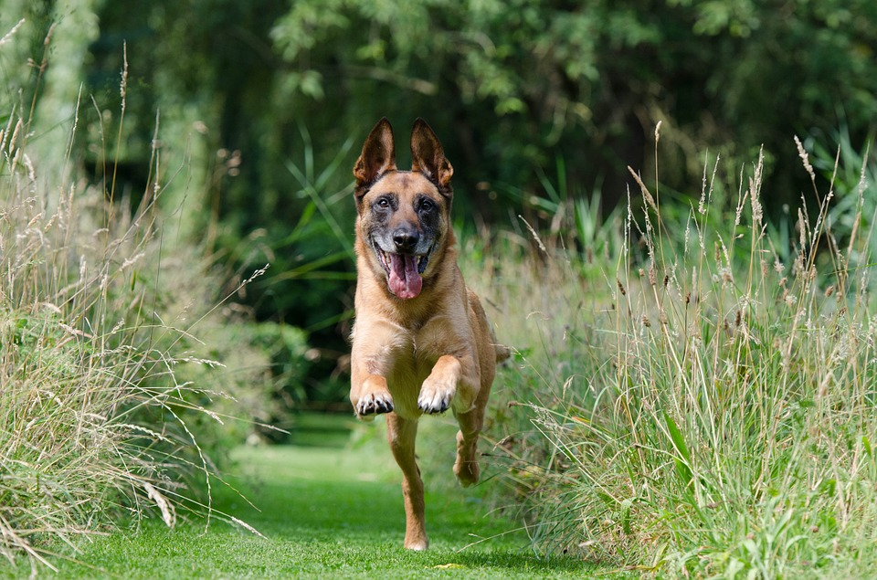 dogex