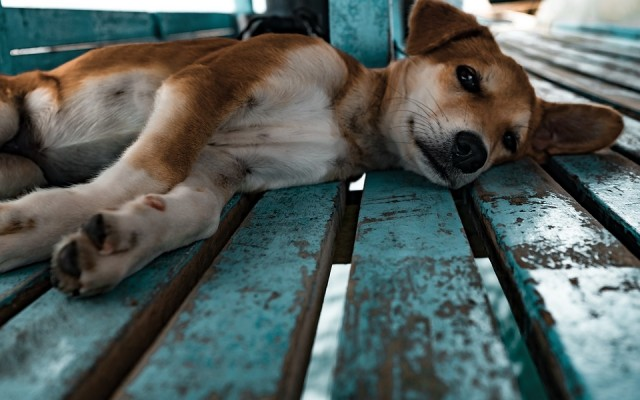 3 Ways We Misinterpret Dog Body Language