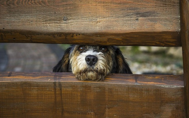 How to Avoid Home Improvement Mishaps with Your Dogs