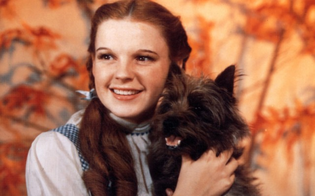 Lassie, Rin Tin Tin, Toto and Stubby: The Stories Behind 4 Famous Dogs