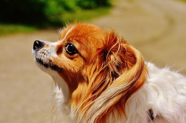 dog-1533766_640