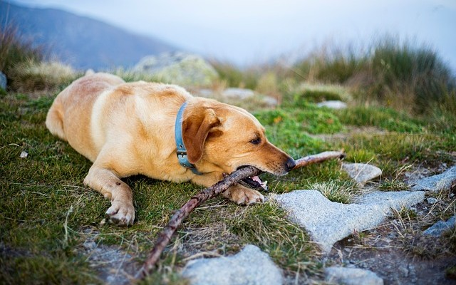 What to Know About Camping with Your Dog