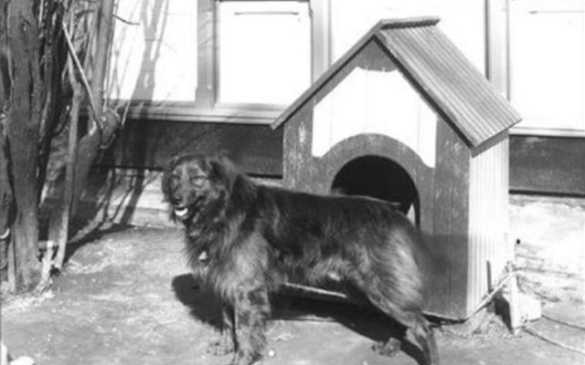 5 Beloved First Dogs