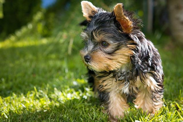 dog-1545090_640