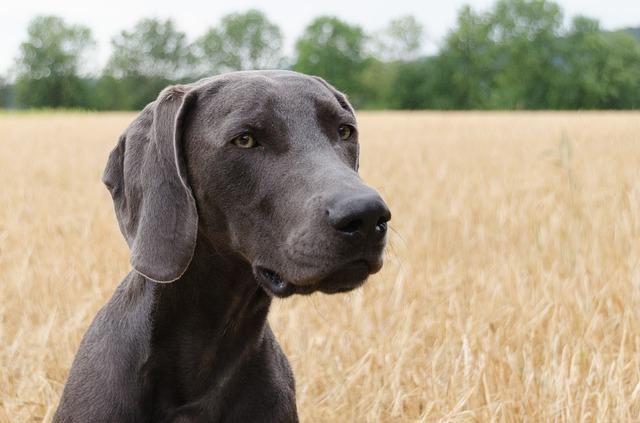 dog-1587082_640