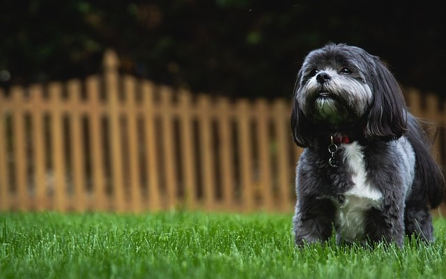 Creating a Dog-Friendly Yard