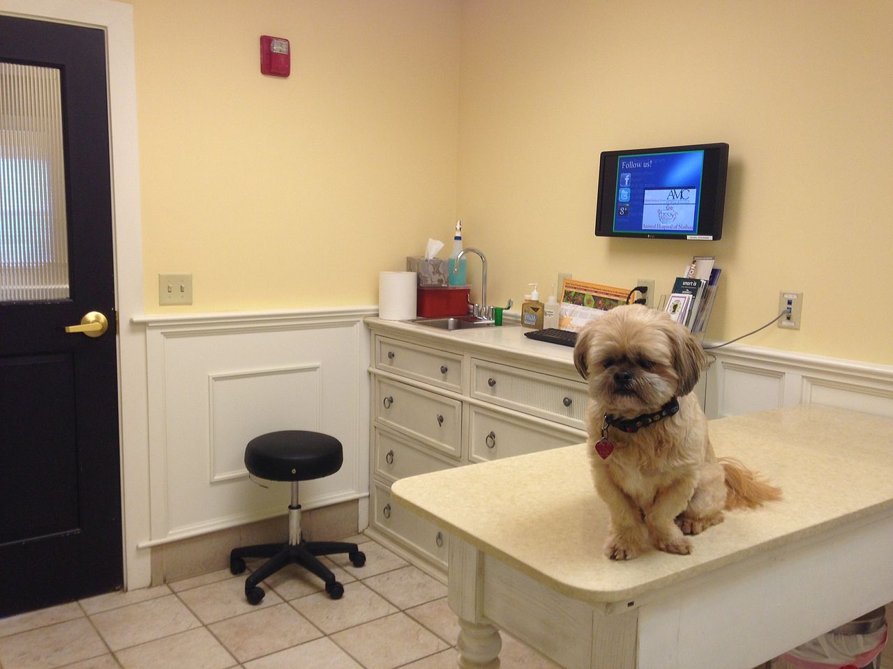 dog-vet-office