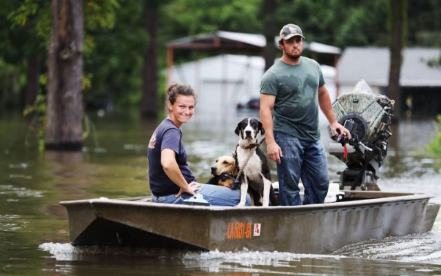Here's How to Help Animals Displaced in the Louisiana Floods