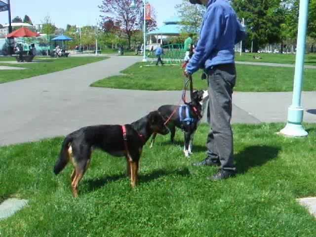 Top 7 Dog Trainers on YouTube - Dog Breeders Guide
