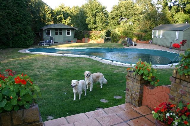 pool-593233_640