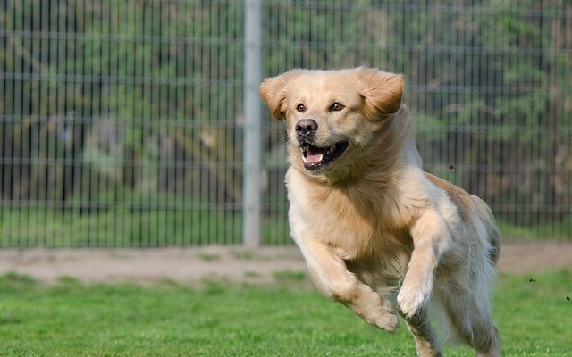 How to Choose the Best Dog Boarding Facility