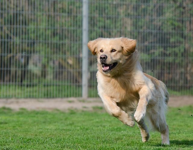 running-dog-750588_640